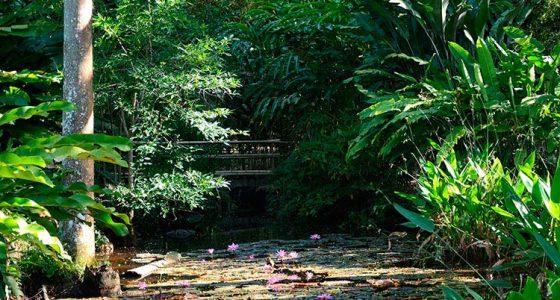 El Jardín Botánico de la UCLV celebra hoy el Día del Botánico Cubano