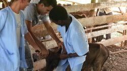 Reinicia servicios la clínica veterinaria de la UCLV