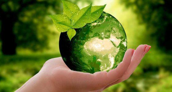 """XI Taller de Ecología y Medio Ambiente """"PROECO2019"""""""