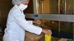 El primer bioplastificante cubano lleva el sello de la UCLV