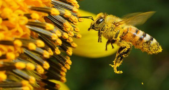 Un día para celebrar a las abejas