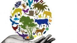 Por un futuro en armonía con la naturaleza