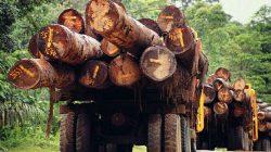 Los árboles: una tecnología natural increíble